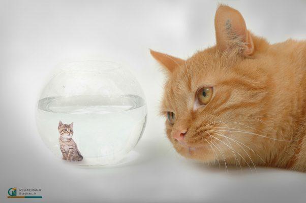 نمونه تصویرسازی گربه